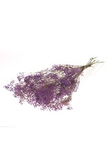 Gypsophila preserved bleached lilac x 30