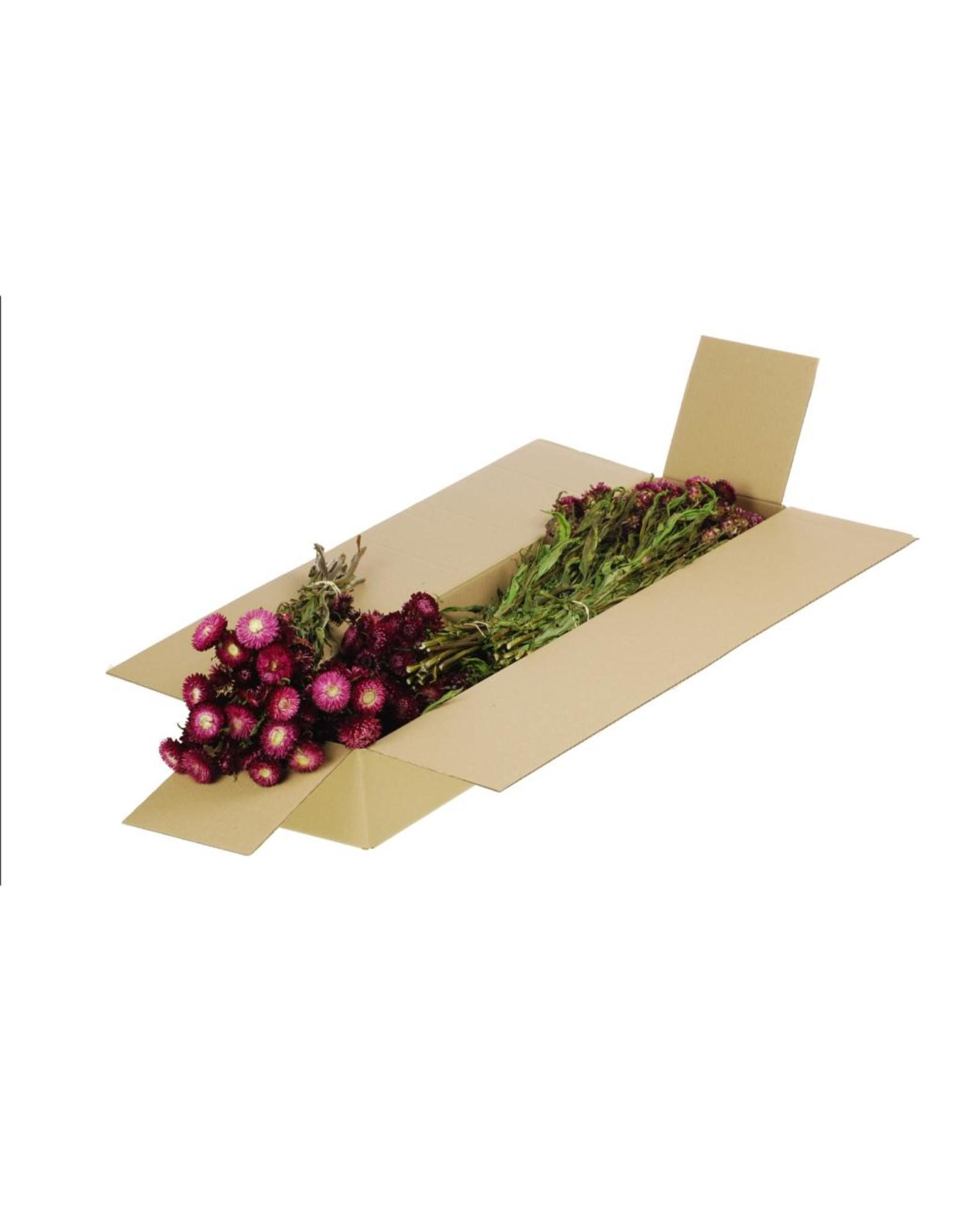 Helichrysum SB natural dark pink x 5