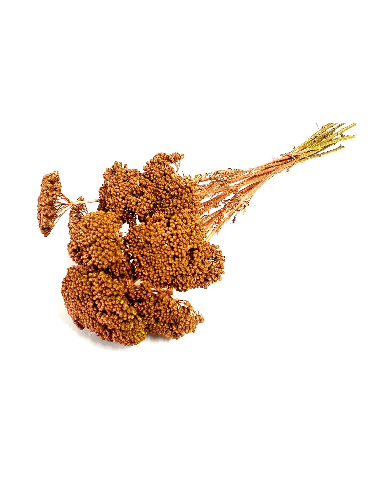 Achillea per stem Copper x 100
