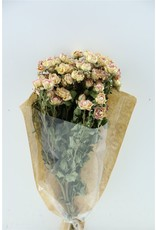 Dried Roses Spray 40cm Bicolor Pink x 2