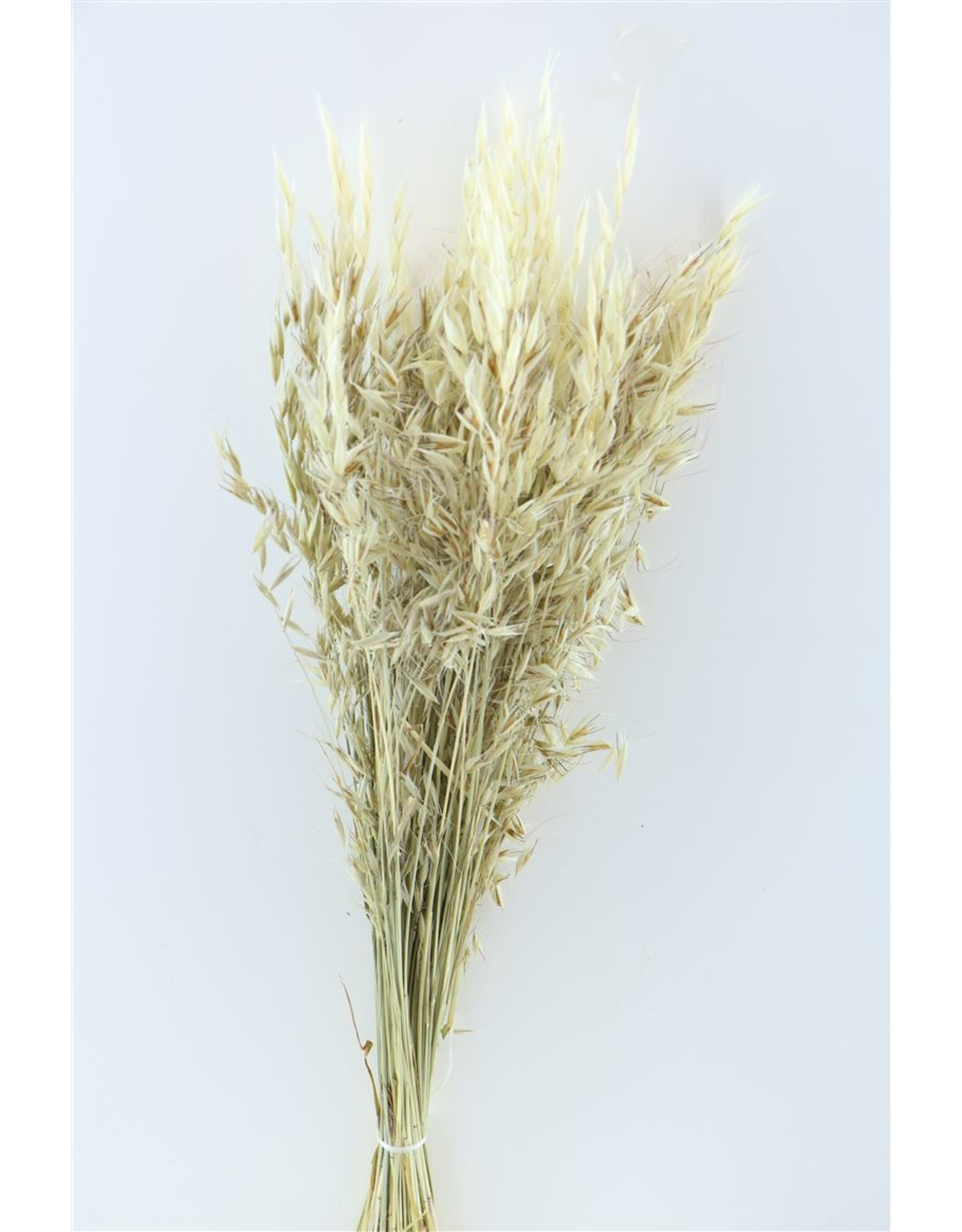 Dried Avena Wild Natural Bunch Poly x 2