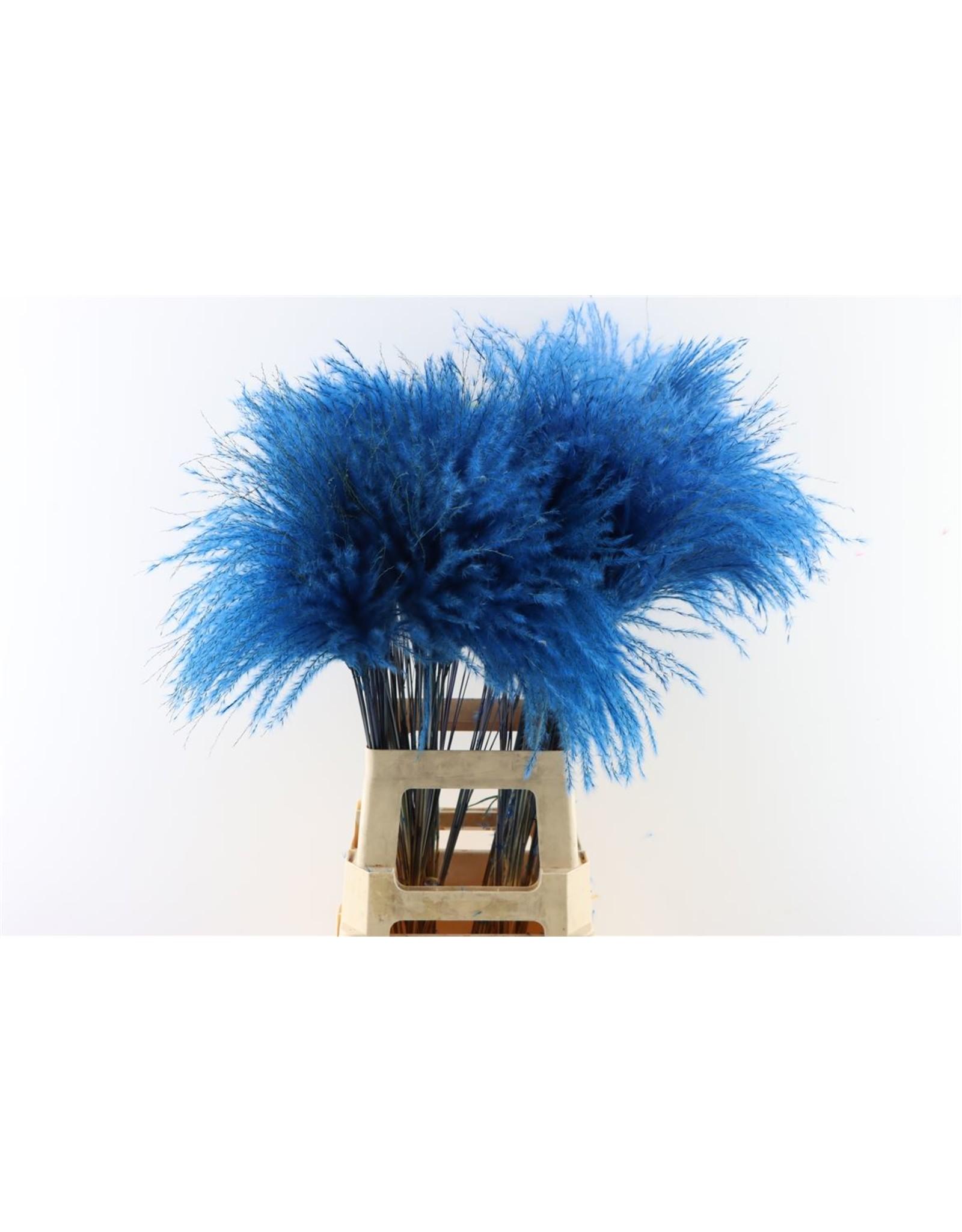 Dried Stipa Feather D. Blue P. Stem x 50