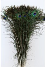 Dried Feather Peacock Naturel Pst x 50