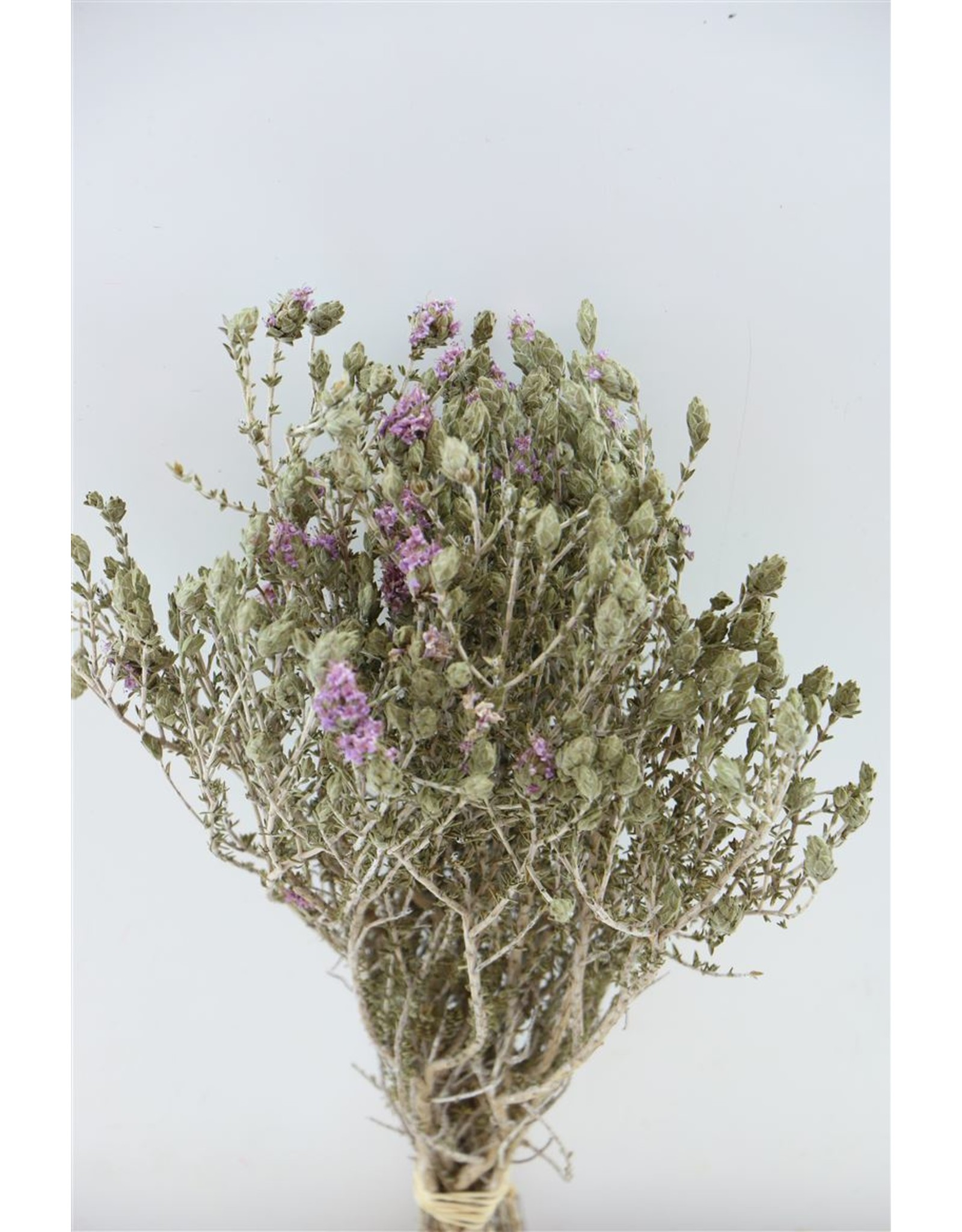 Dried Blooming Thyme L. Blue Bunch x 2