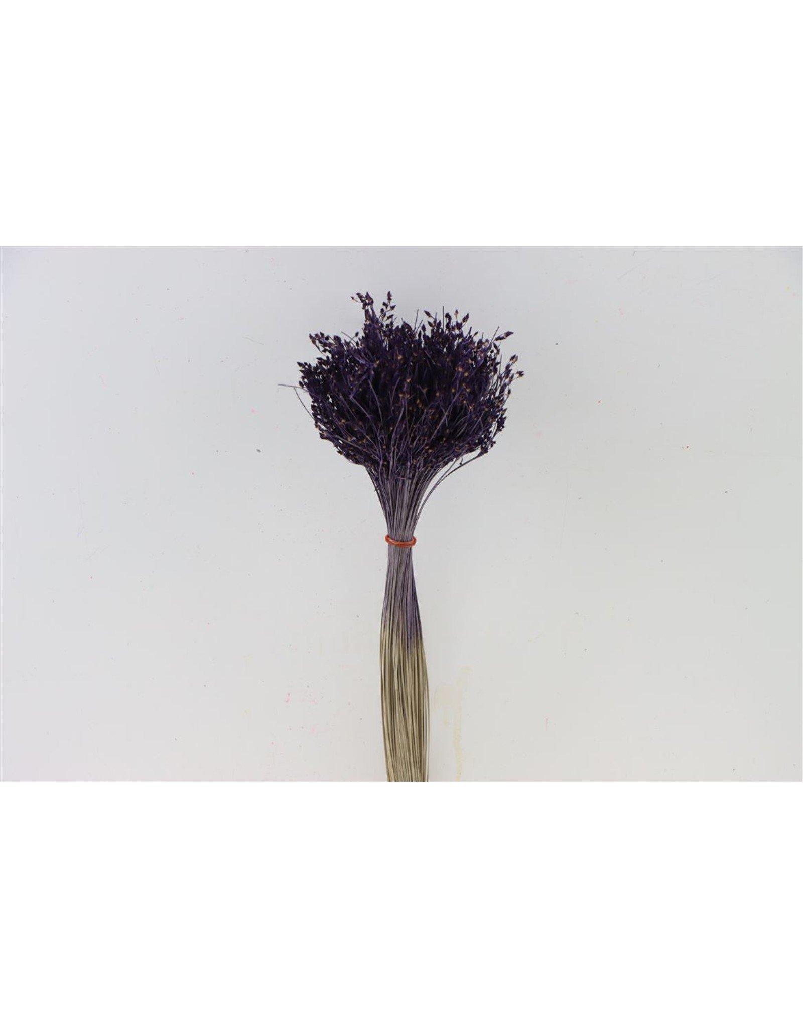 Dried Sai Thong Purple Bunch x 2