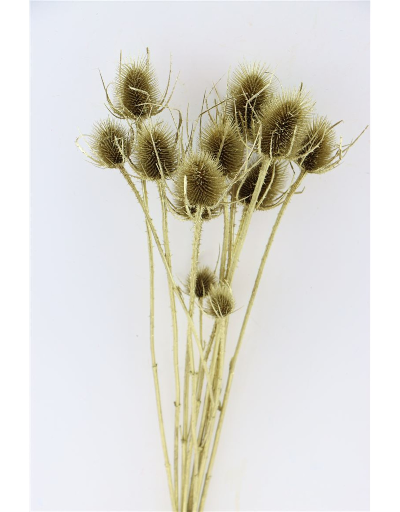 Dried Thistle Gold Bunch x 2