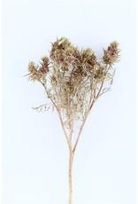 Dried Carciofi Natural P.pcs x 1