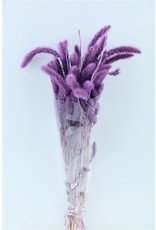 Dried Setaria Lilac Bunch x 1