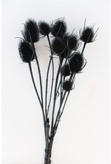 Dried Thistle Black Bunch x 2