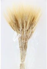 Dried Triticum Blond Beard 250gr Bunch Poly x 2