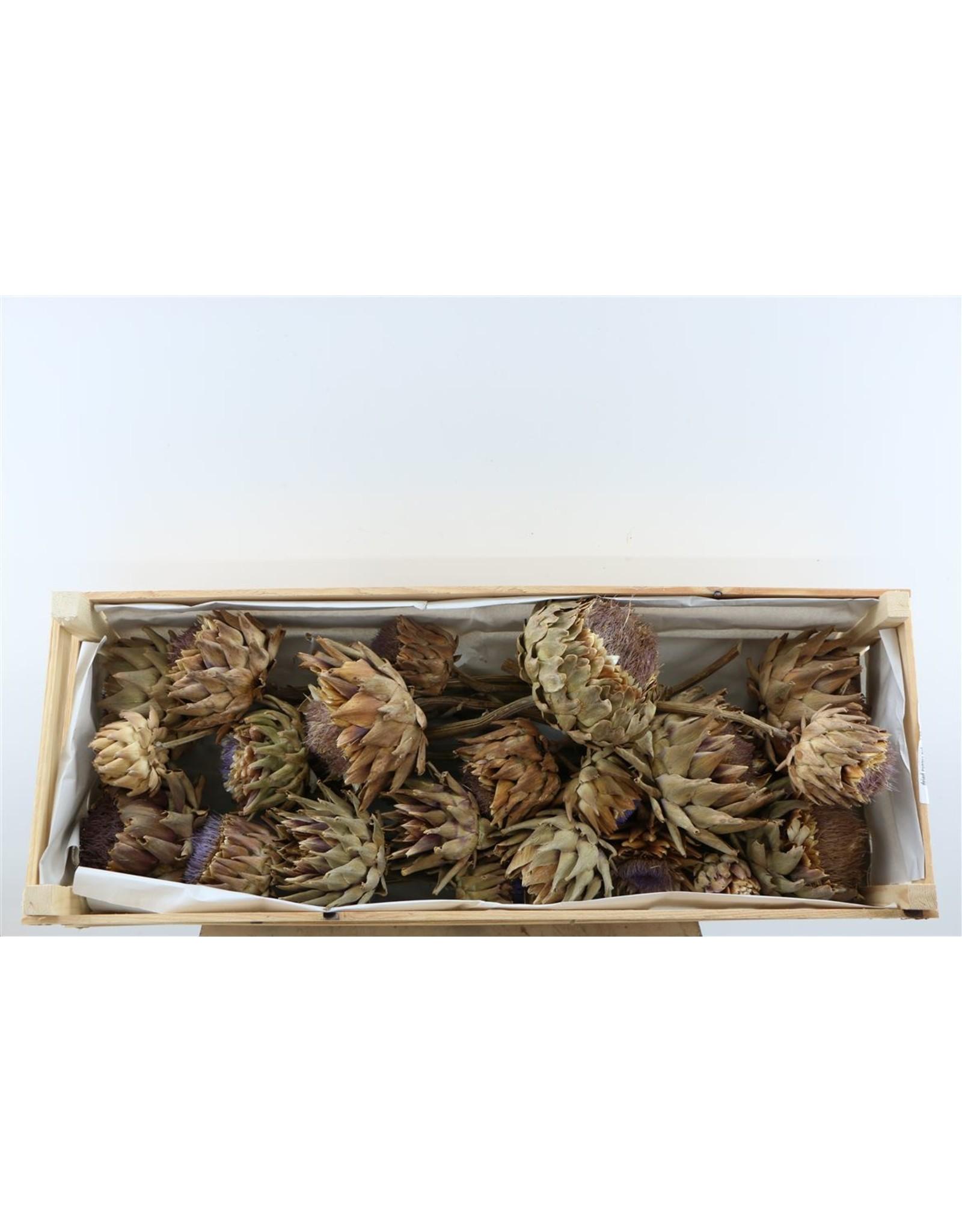 Dried Cynara Natural 20pcs Box x 1