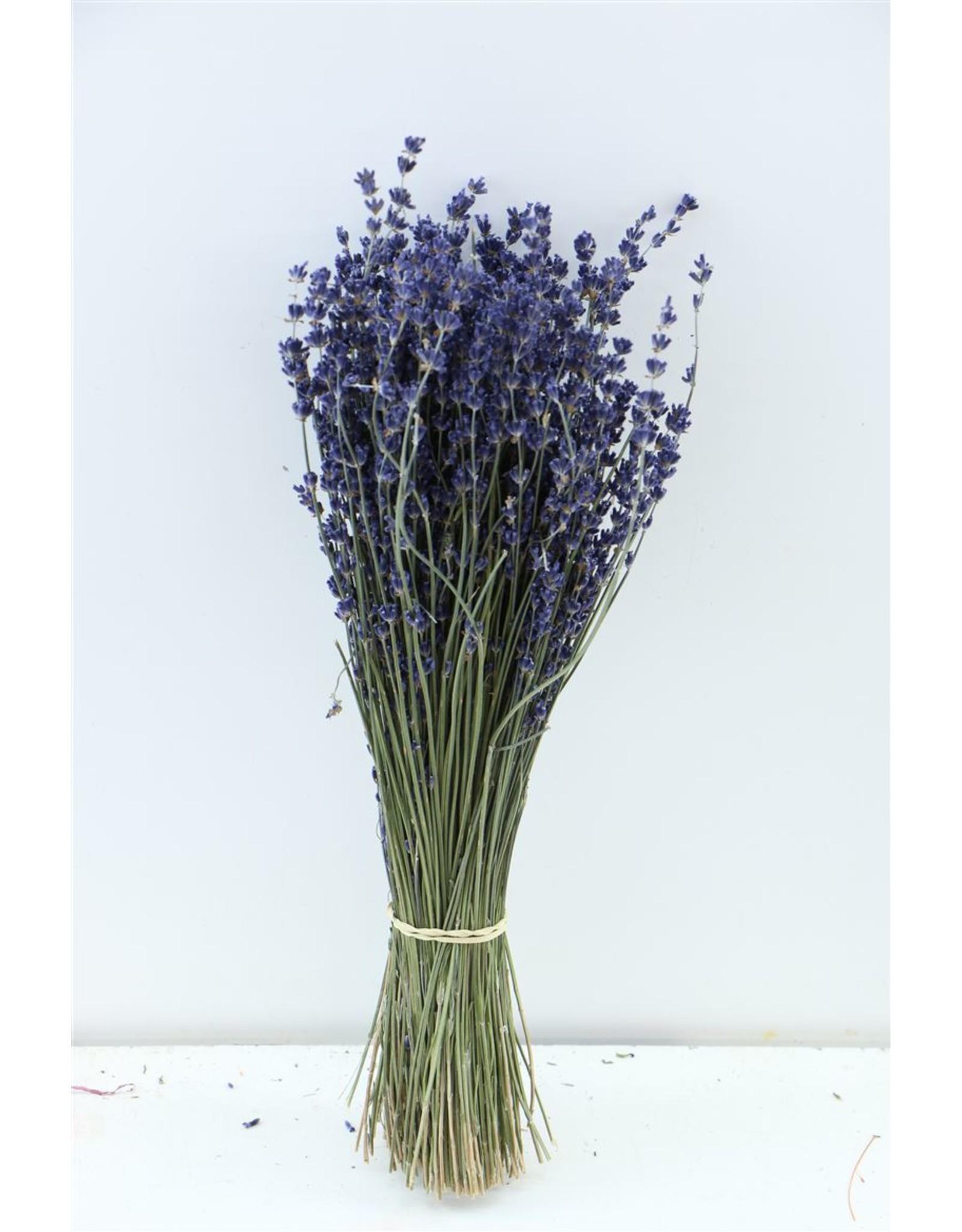 Dried Lavendel Dark Blue 100gr Bunch x 5