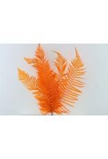 Dried Royal Fern Orange Bunch x 1