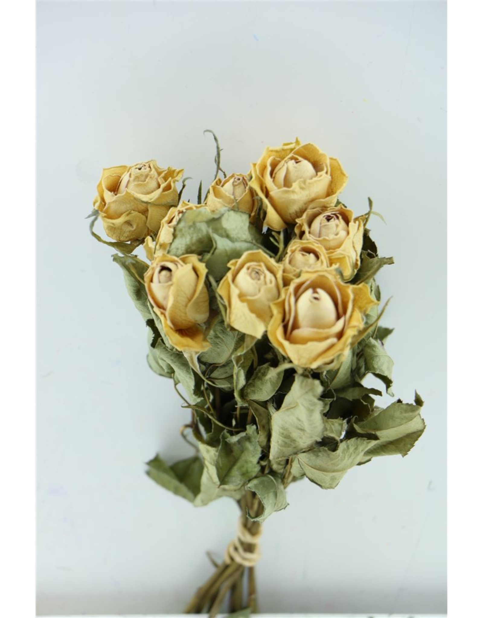 Dried Roses Pink 10pcs Scented P Bu x 2