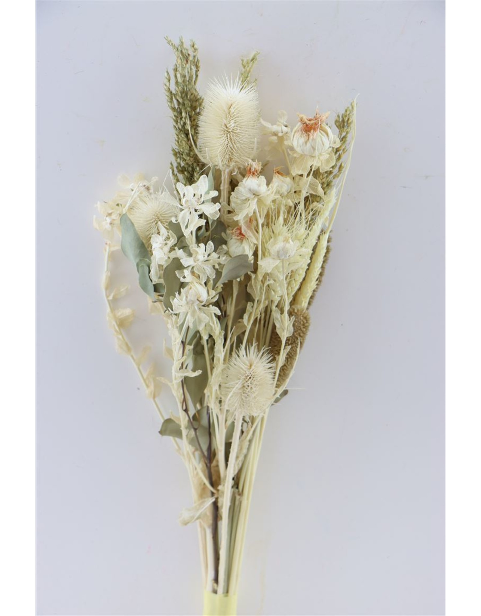 Dried Bouquet Bleached Carth/ Thistle x 2
