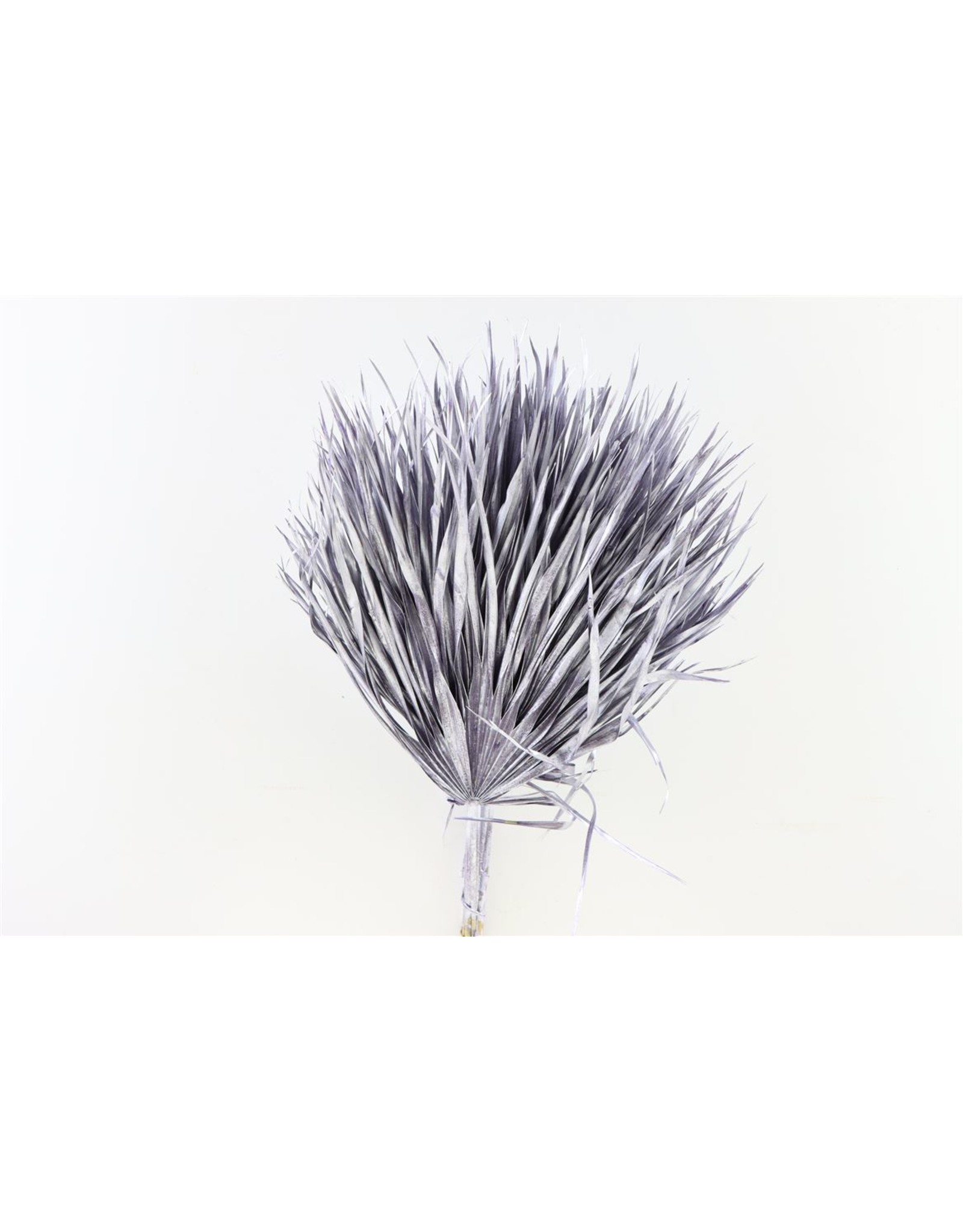 Dried Chamaerops (10tk) Metalic Paars Bunch x 1