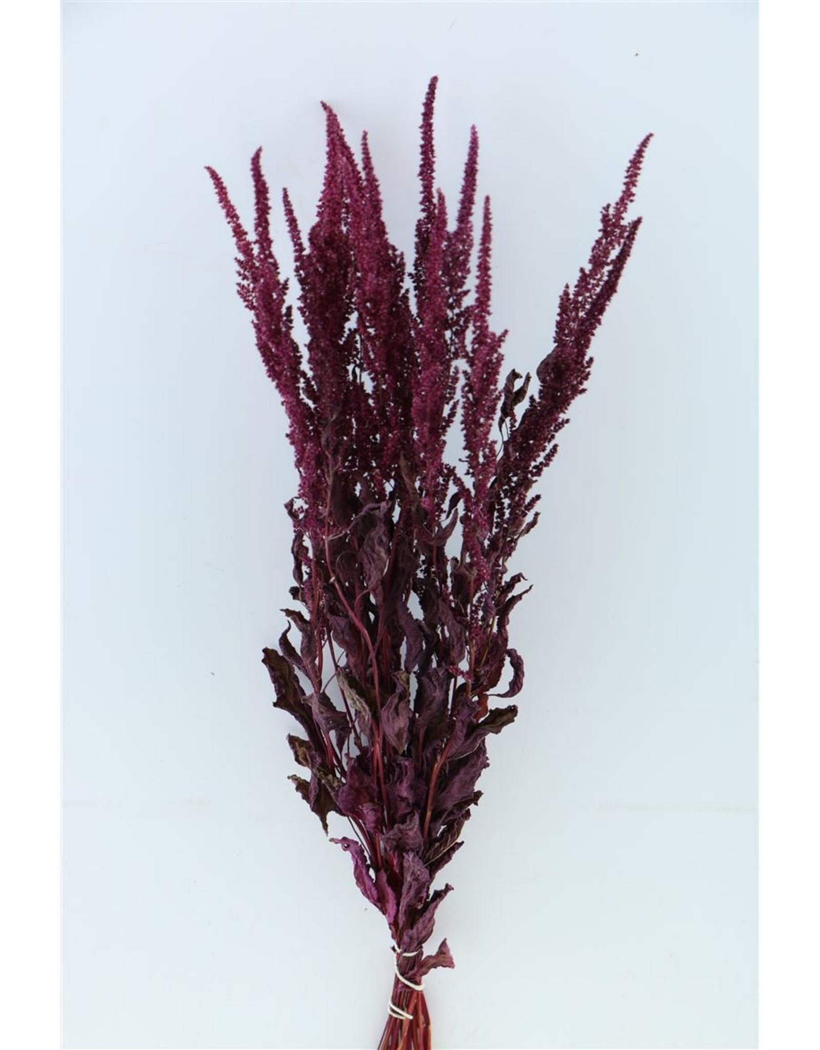 Dried Amaranthus Cruentus Red x 2