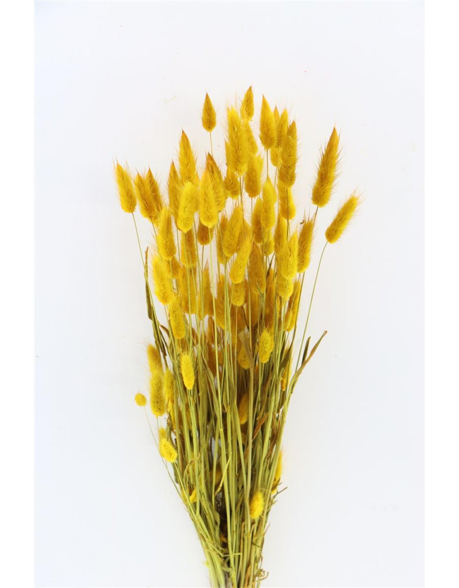 Dried Lagurus Yellow Bunch x 2