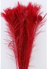Dried Feather Peacock L90-100 Red x 50