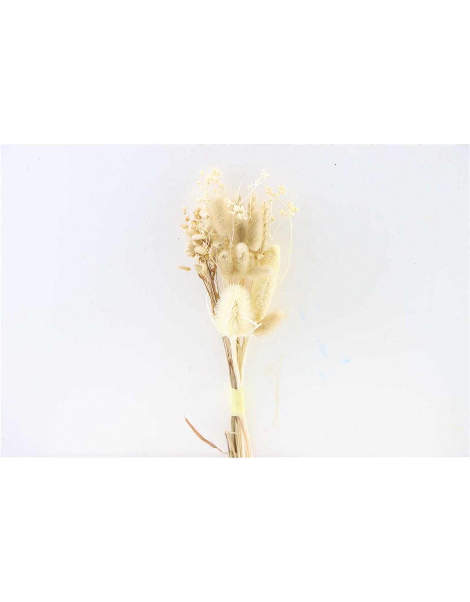 Dried Bouquet Bleached x 2