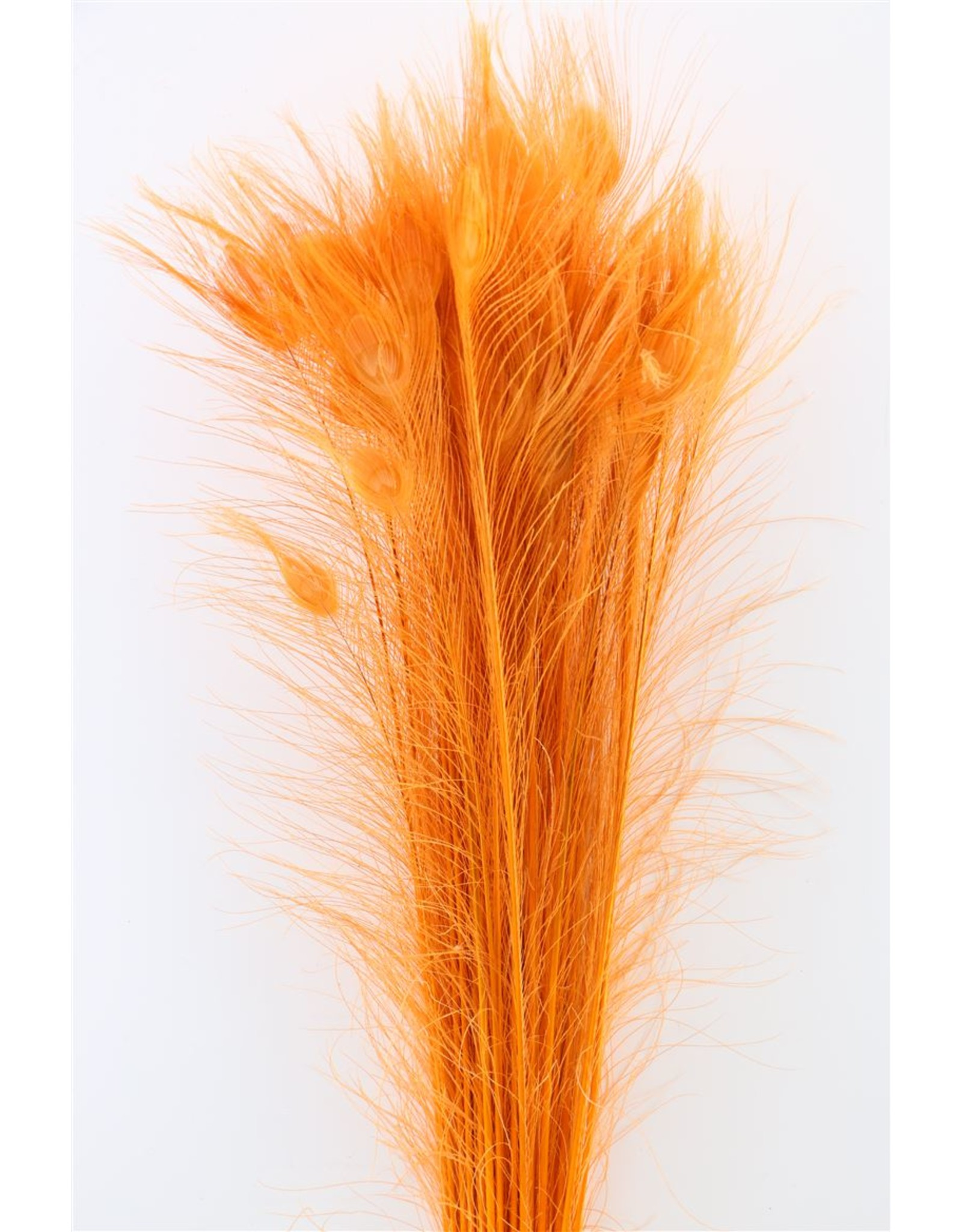 Dried Feather Peacock L90-100 Orange x 50