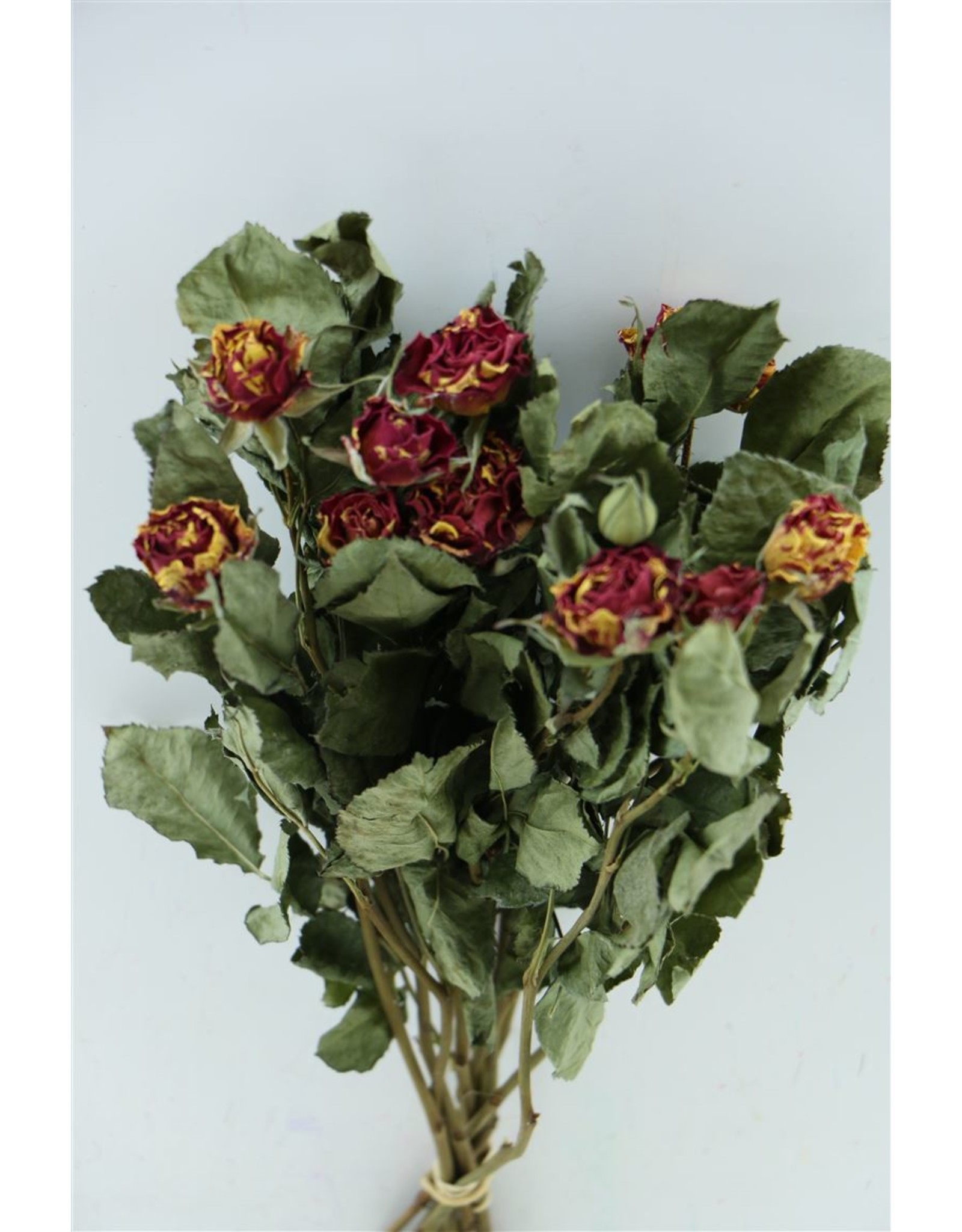 Dried Roses Spray Red-yellow 10pcs x 8