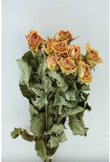 Dried Roses Salmon 10pcs Scented Bu x 8