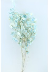 Dried Lunaria L.blue Bunch x 1