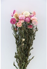 Dried Helichrysum Pink Bunch x 2