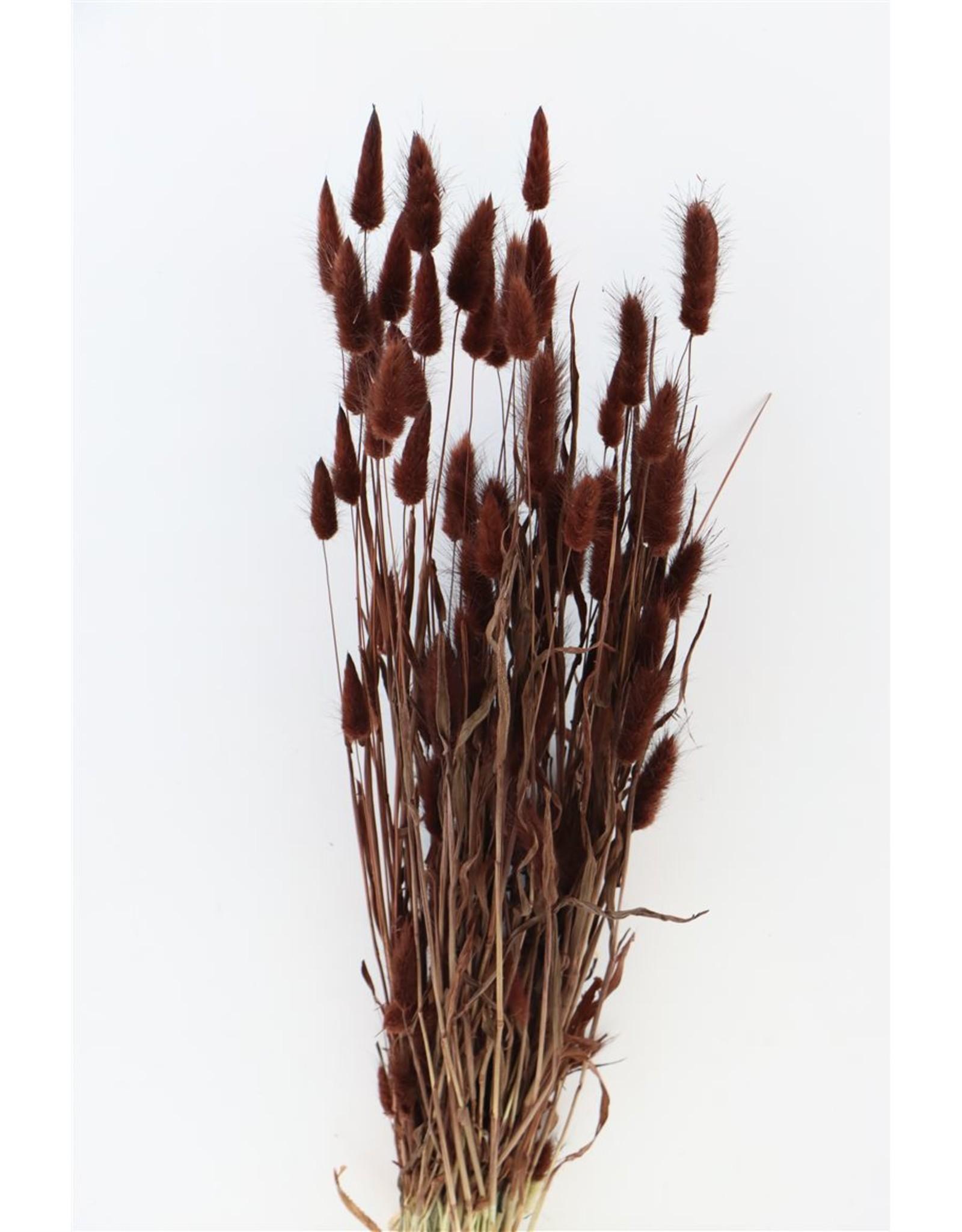 Dried Lagurus Brown Bunch x 2