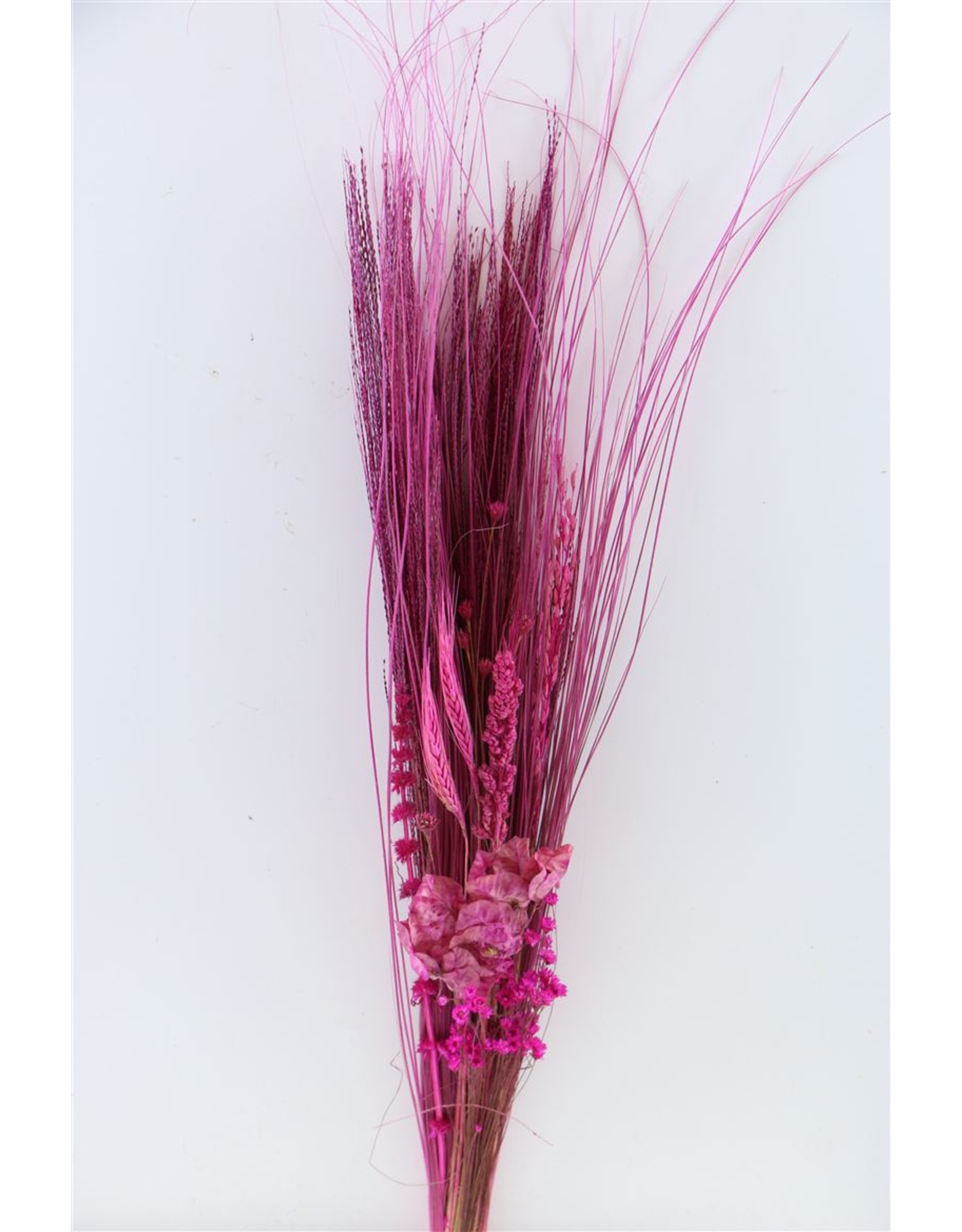 Dried Bouquet Romance Cerise Bunch x 1