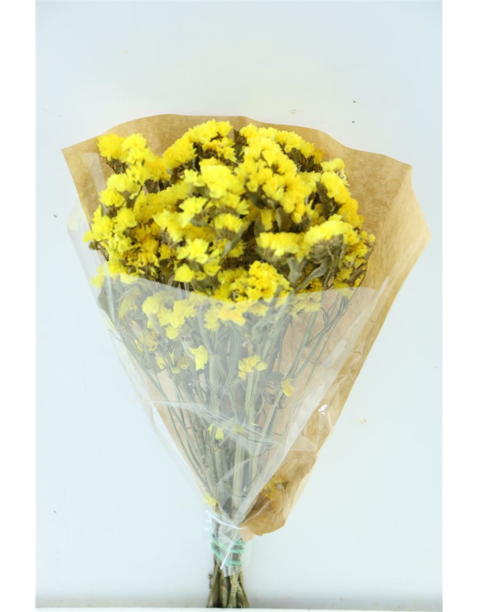 Dried Limonium Statice Yellow Short Bunch x 5