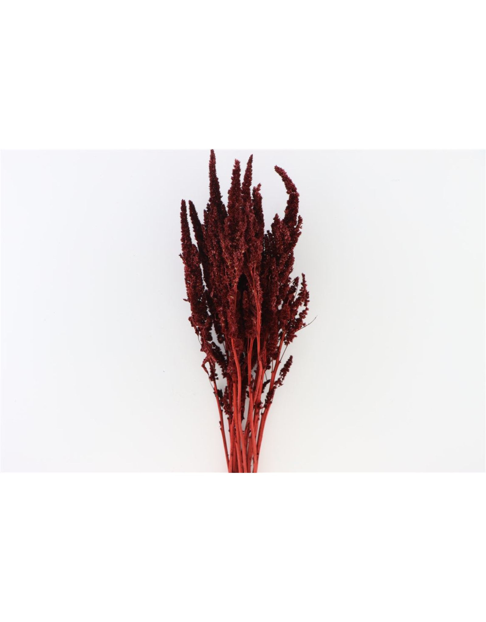 Dried Amaranthus Bordeaux Bunch x 2