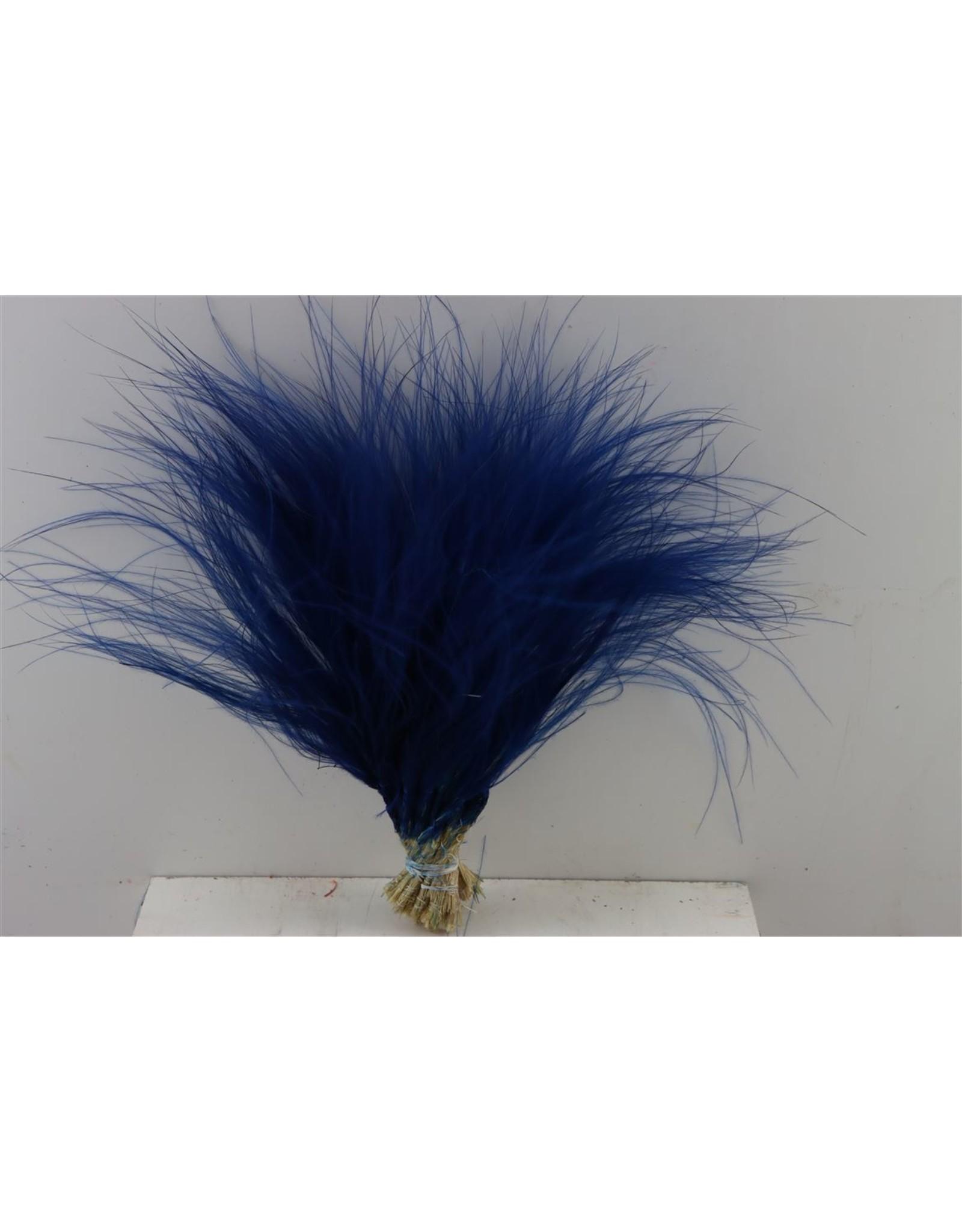 Dried Stypha Penata Blauw Bunch x 5