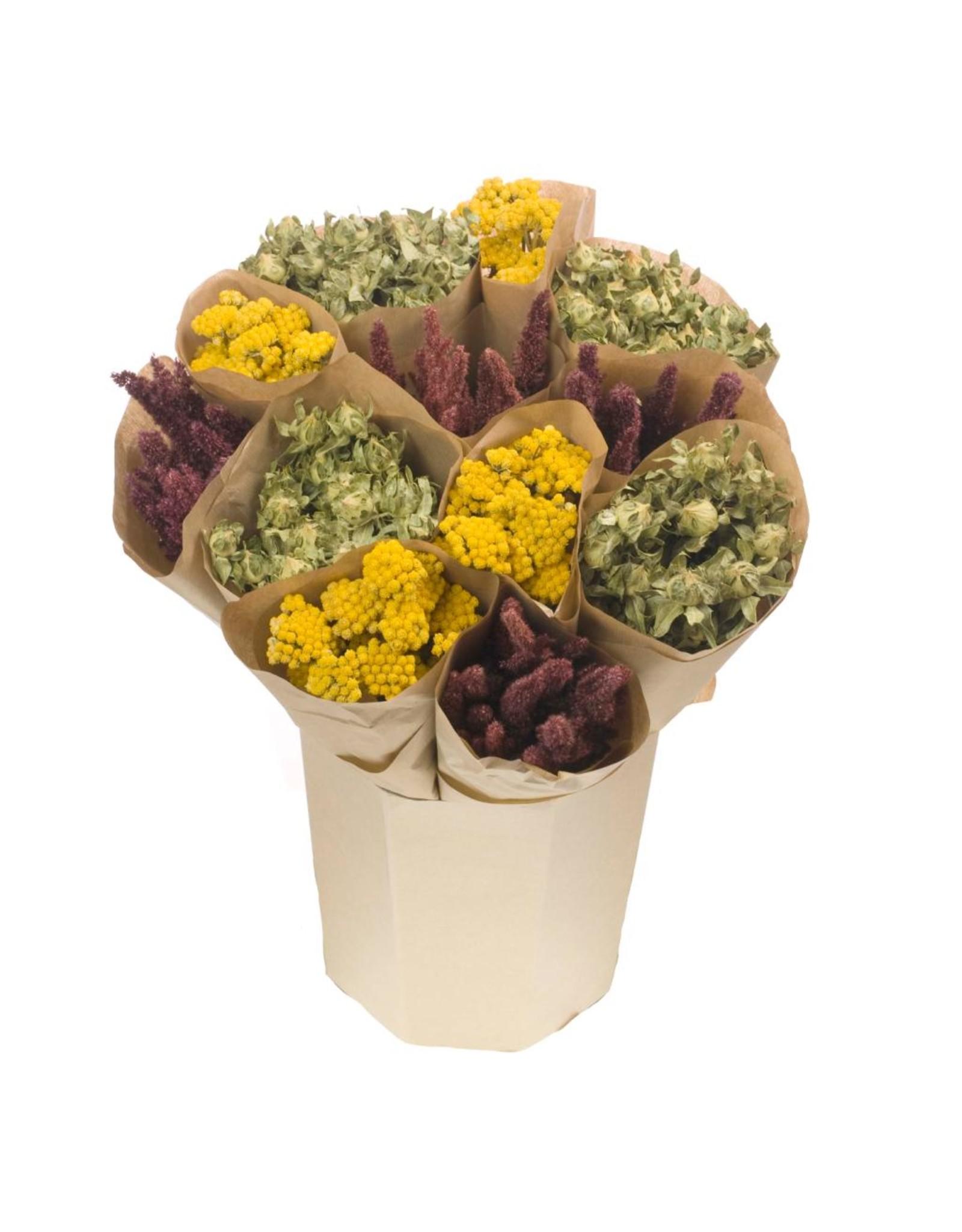 Bucket mix dried bunches lona, amaranthus, bidens x 12