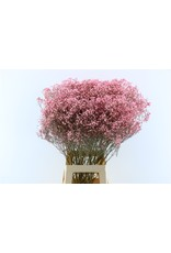 Dried Gyps Pink Bunch x 5
