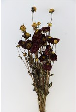 Dried Dahlia Purple 20 Stems Bunch x 2