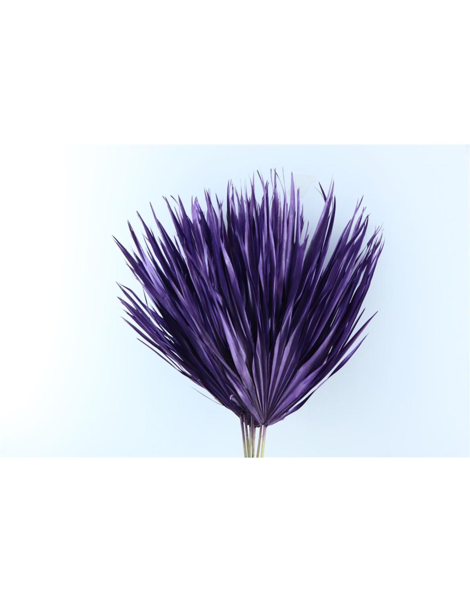 Dried Chamaerops (10tk) Purple Bunch x 1