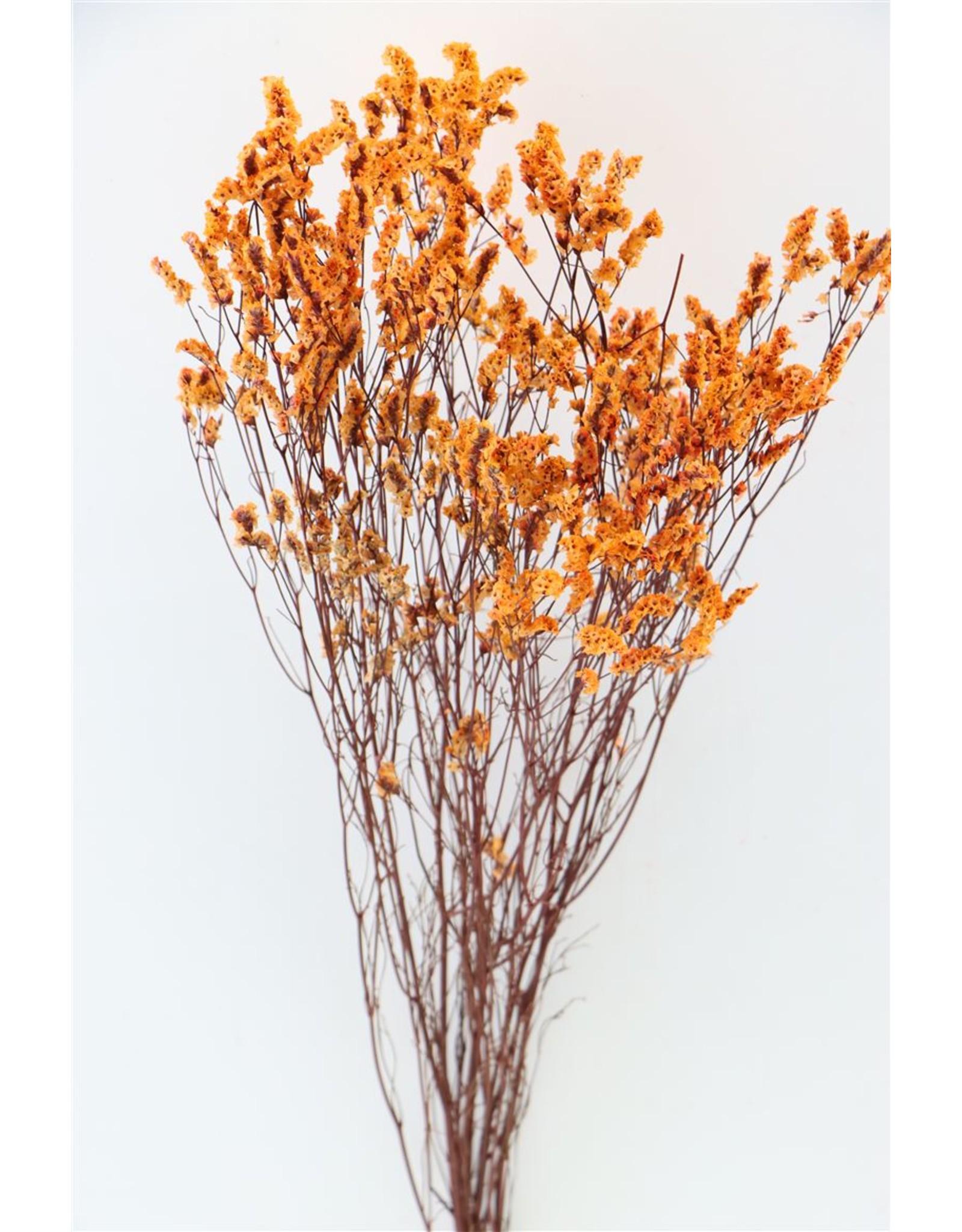 Dried Lim. Diamond Orange Bunch x 5