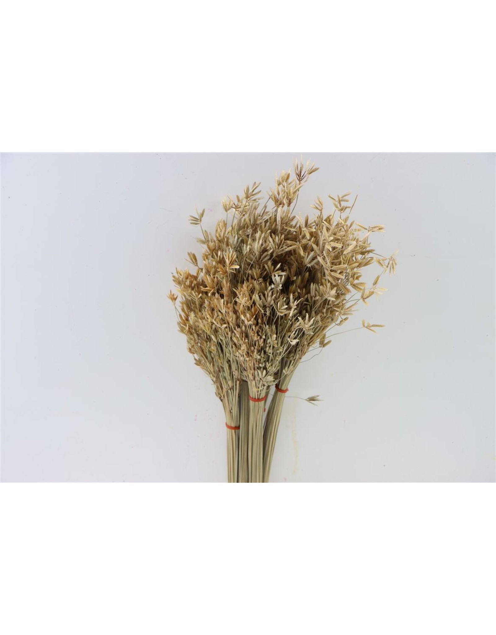 Dried Cosmos Natural Bunch x 1