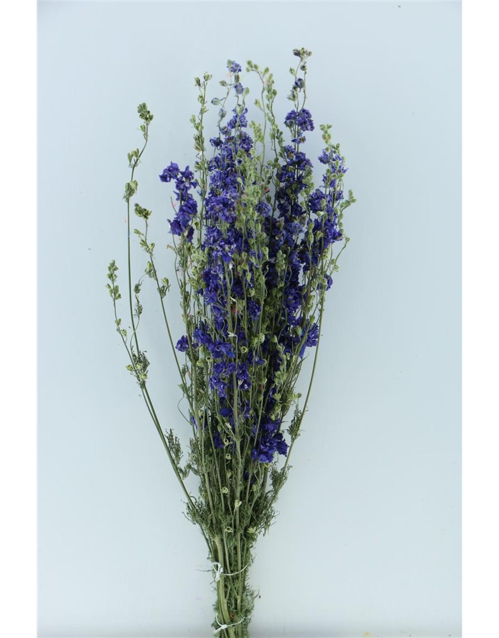 Dried Delphinium Blue Extra Bunch x 2
