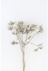 Dried Eryngium Natural Grey Bunch x 2