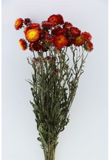 Dried Helichrysum Red Bunch x 2