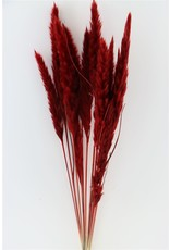 Dried Fluffy Pampas D. Red Slv Bunch x 1