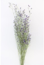 Dried Limonium Blue Bunch x 2