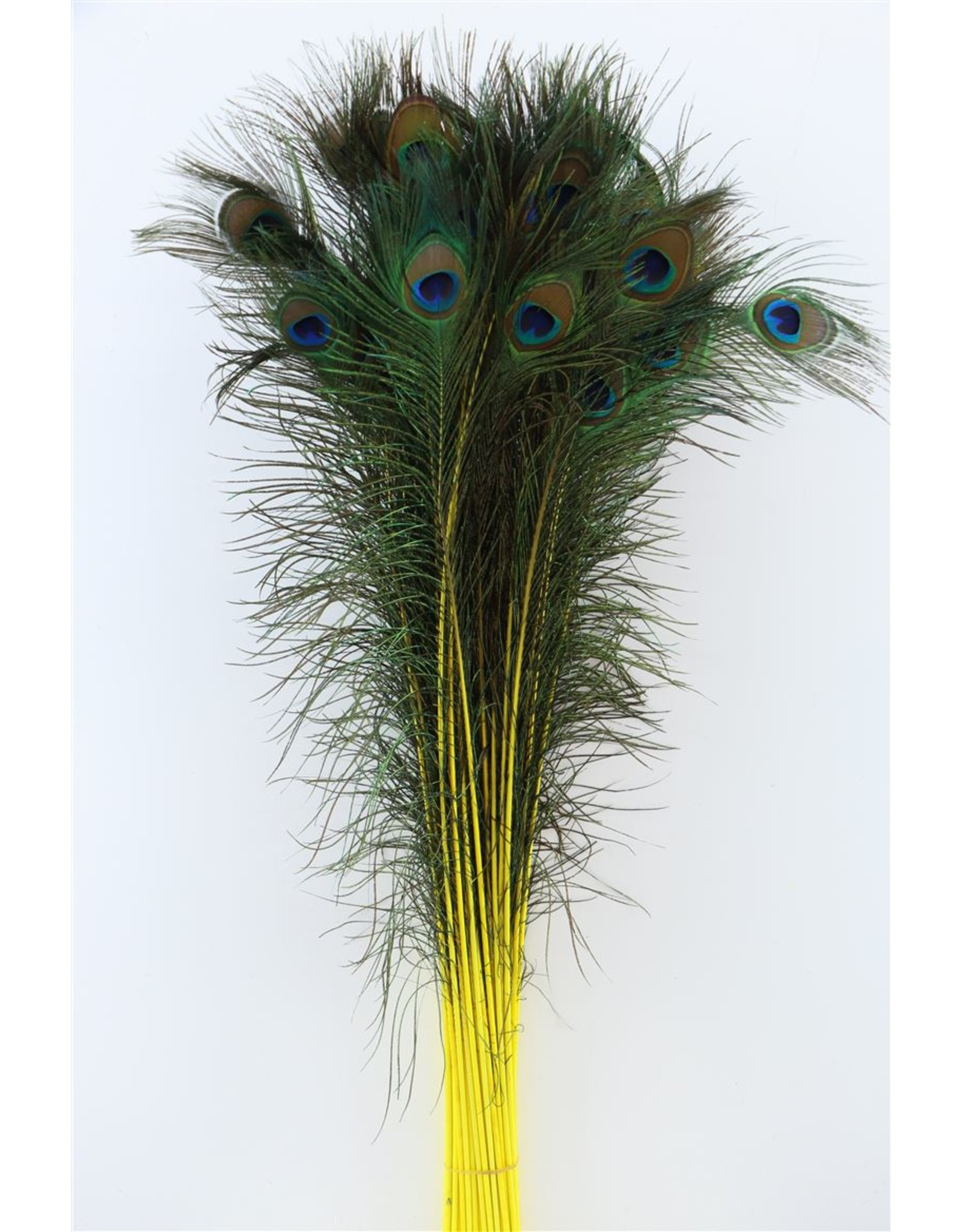 Dried Feather Peacock Natural/yellow x 50