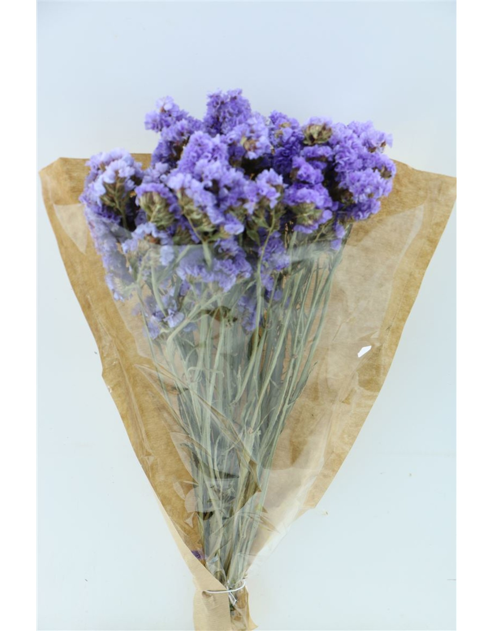 Dried Limonium Statice Light Blue Bunch x 2