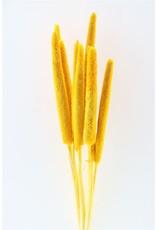 Dried Babala 10pc Ocker Yellow Bunch x 2