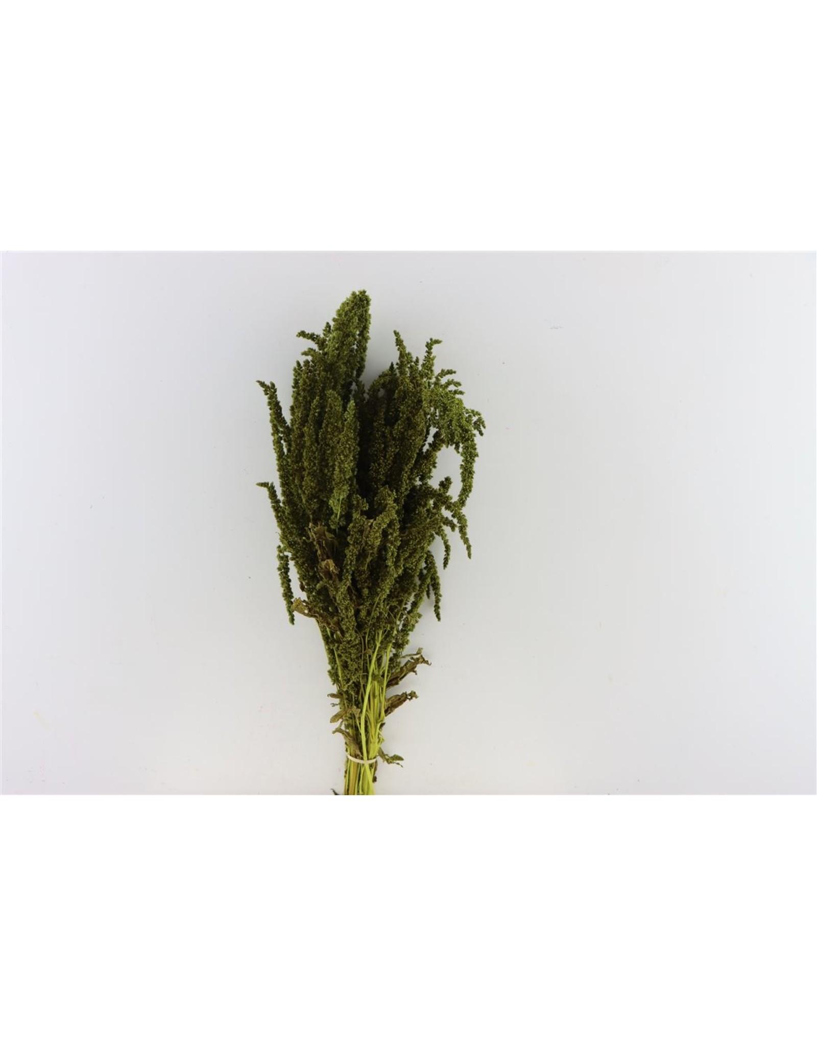 Dried Amaranthus Light Green Bunch x 2