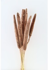 Dried Babala 10pc Copper Bunch Slv x 2